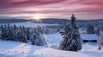 Обои Дома в окружении зимнего леса