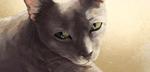 Обои Серый зеленоглазый кот, by go234
