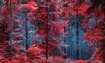 Обои Осенний лес Nisici, Ilijas, Bosnia / Nisici, Ilijas, Босния, фотограф Mevludin Sejmenovic