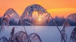 Обои Замерзшие стебли на фоне восходящего солнца, фотограф Andrаs Pаsztor