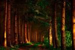 Обои Две колеи среди леса, by Marie Lalanne Manzor