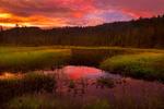 Обои Розовый рассвет над заводями перед лесом, фотограф Tore H