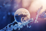 Обои Зимнее чудо-замерзший шар на ветке, фотограф Andrаs Pаsztor
