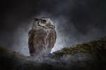 Обои Сова в ночной дымке, фотограф Tanja Brandt