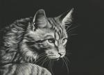Обои Черно-белый рисунок кота, by shonechacko