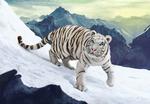 Обои Белый тигр на снегу, by Shellz - art