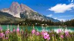 Обои Цветы иван - чая перед озером, фотограф Attila Pivarnyik