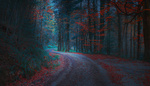 Обои Дорога в лесу, Banovici, Bosnia / Бановичи, Босния, фотограф Mevludin Sejmenovic