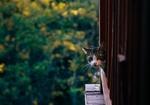 Обои Выглядывающий из за решетки кот, by Yugen
