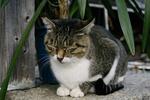 Обои Серый с белым кот дремлет, сидя на асфальте