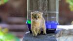 Обои Голубоглазый рыжий котенок, фотограф Darian