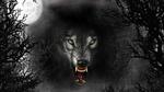 Обои Волк в ночном лесу под луной