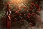 Обои Девушка стоит у куста цветущей гортензии, фотограф Monica Lazar