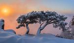 Обои Сосны Даэдунсана в снегу на фоне заката, фотограф jae youn Ryu