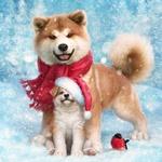 Обои Акита-ину в шарфе, щенок в новогодней шапочке и снигирь на снегу на фоне зимней природы и падающих снежинок