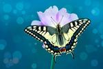 Обои Бабочка на цветке, фотограф Mustafa Оzturk