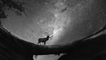 Обои Олень стоит на фоне звездного неба / Работа: Падающая звезда / Shooting Star, by xLocky