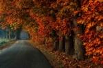 Обои Асфальтированная дорожка у осеннего леса, фотограф Jan - Herman Visser