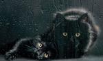 Обои Черная кошка и котенок за окном с каплями дождя, фотограф Darian