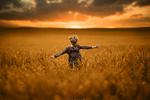 Обои Девочка на огромном поле, фотограф Sveta Butko