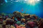 Обои Коралловый риф под водой