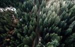Обои Дорога пролегающая через лес