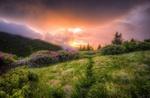 Обои Луговые цветы на закате под облачным небом, фотограф Josh T