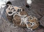 Обои Детеныш леопарда лежит и смотрит на паука, by Psithyrus