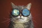 Обои Серый кот в очках, на которых нарисовано лунное, облачное небо