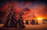 Обои Зимний закат над елями, фотограф hmetosche