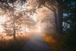 Обои Дорога в утреннем тумане, фотограф Johannes Hulsch