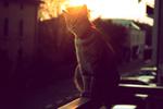 Обои Кошка сидит на балконе на фоне солнца, by Tania Bertoni