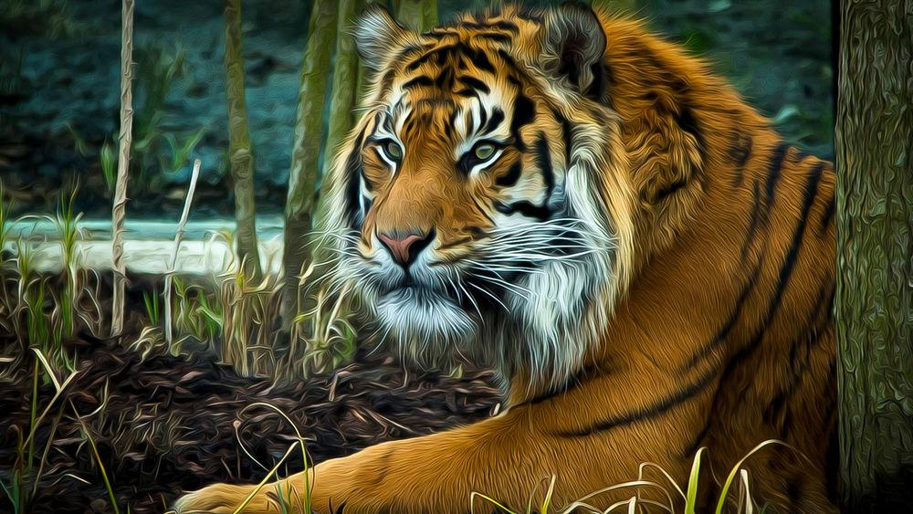 Обои для рабочего стола Тигр на природе