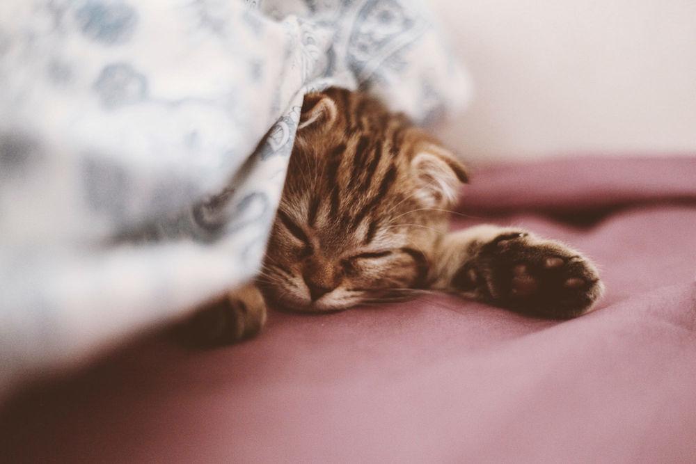 Обои для рабочего стола Спящая кошка, фотограф Taya Iv