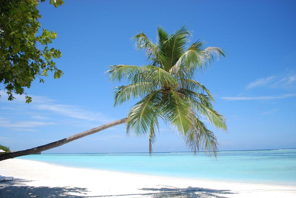 Фото девушек на тропическом побережье эротика фото