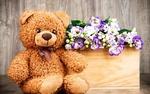 Обои Плюшевый медвежонок сидит возле деревянной коробки, на которой лежит букет эустом