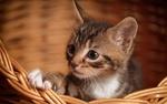 Обои Полосатый котенок сидит в корзине
