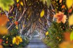 Обои Падающие осенние листья Ballymoney, Northern Ireland / Ballymoney Северная Ирландия, фотограф Joe Daniel Price