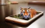 Обои Тигр, появившийся из телефона