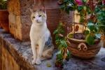 Обои Кошка сидит у горшка с растением