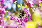Обои Бабочка на весенней цветущей ветке, фотограф Xiaolu