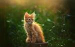 Обои Рыжий котенок сидит на пне. Фотограф Инна Сухова