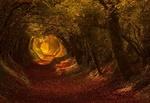 Обои Дорожка, покрытая листьями, в осеннем лесу. Фотограф Oliver Andreas Jones