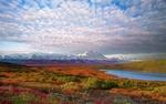 Обои Осенняя поляна на фоне заснеженных гор в национальном парке Денали, штат Аляска, США / Denali National Park, Alaska, USA