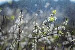 Обои Цветущие весенние ветки под дождем