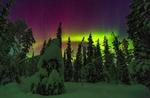 Обои Северное сияние над заснеженным лесом в финской Лапландии, фотограф Lukas Jonaitis