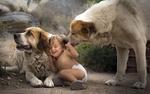 Обои Собака нюхает ребенка и он, смеясь, прижимается ко второй собаке