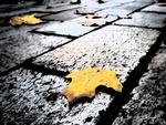 Обои Желтые листья лежат на тротуаре