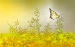 Обои Бабочка на растении, фотограф Eleonora Di Primo