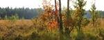 Обои Пейзаж с деревьями в осеннем убранстве на переднем плане, by ErikTanghe